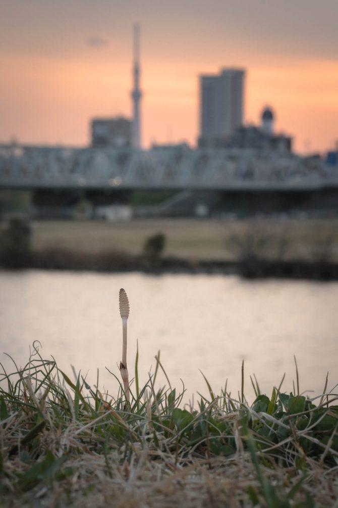 江戸川土手の夕暮れ