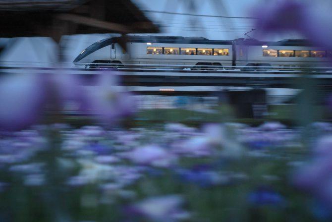 イブニングライナーと菖蒲園