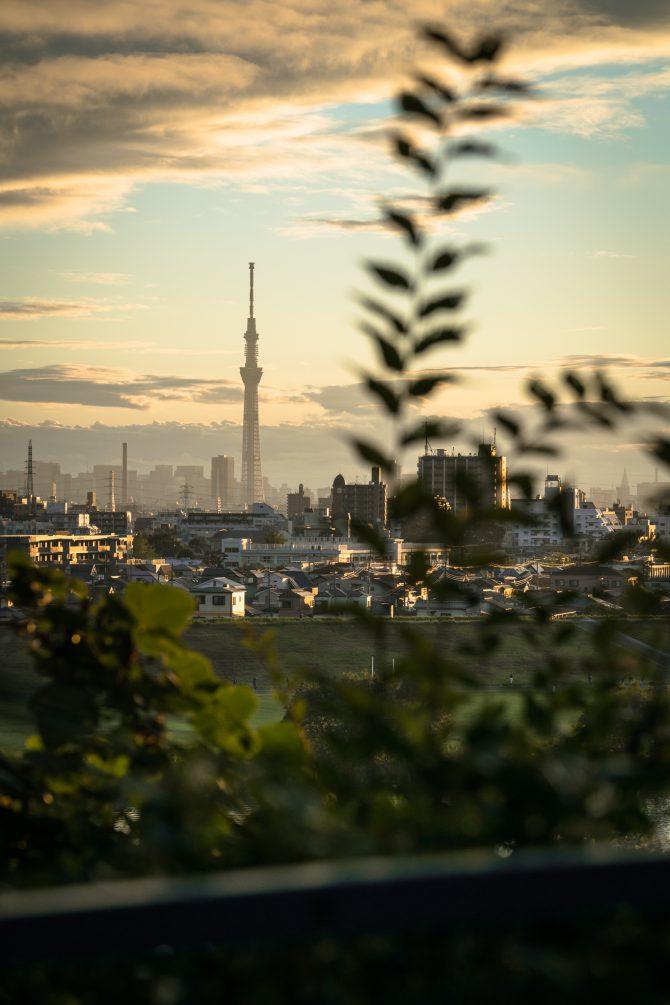 里見公園からの夕景