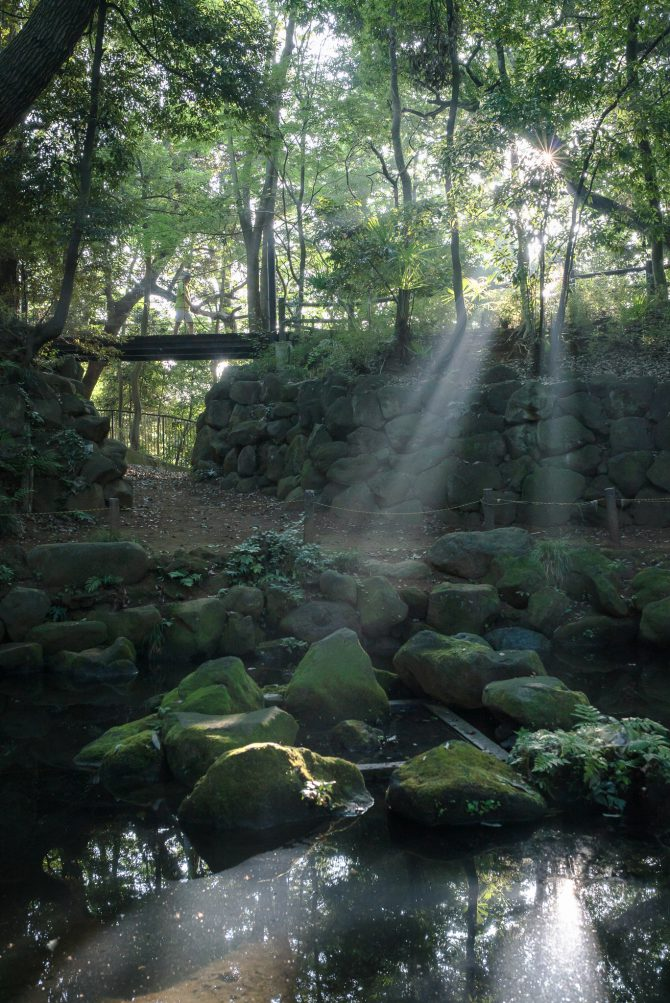 光芒の里見公園