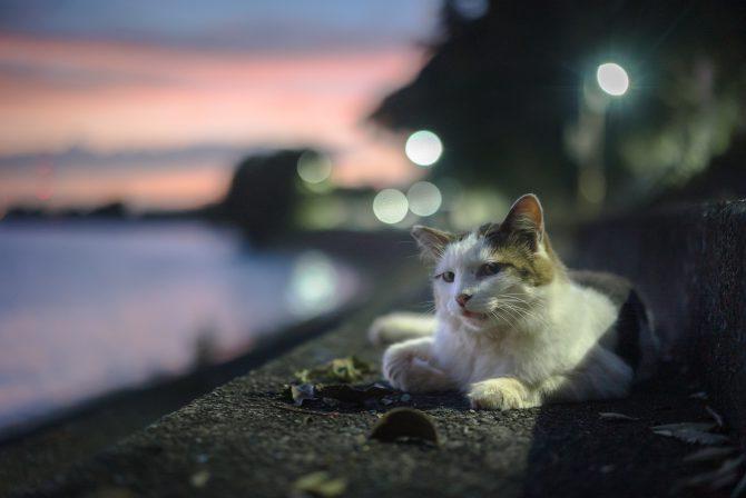 夕焼け空とオレ