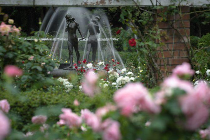 噴水と秋のバラ