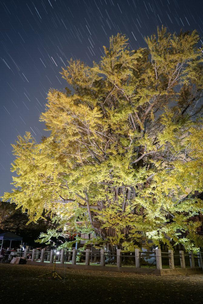 星の軌跡と千本公孫樹