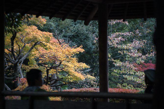じゅん菜池緑地の紅葉