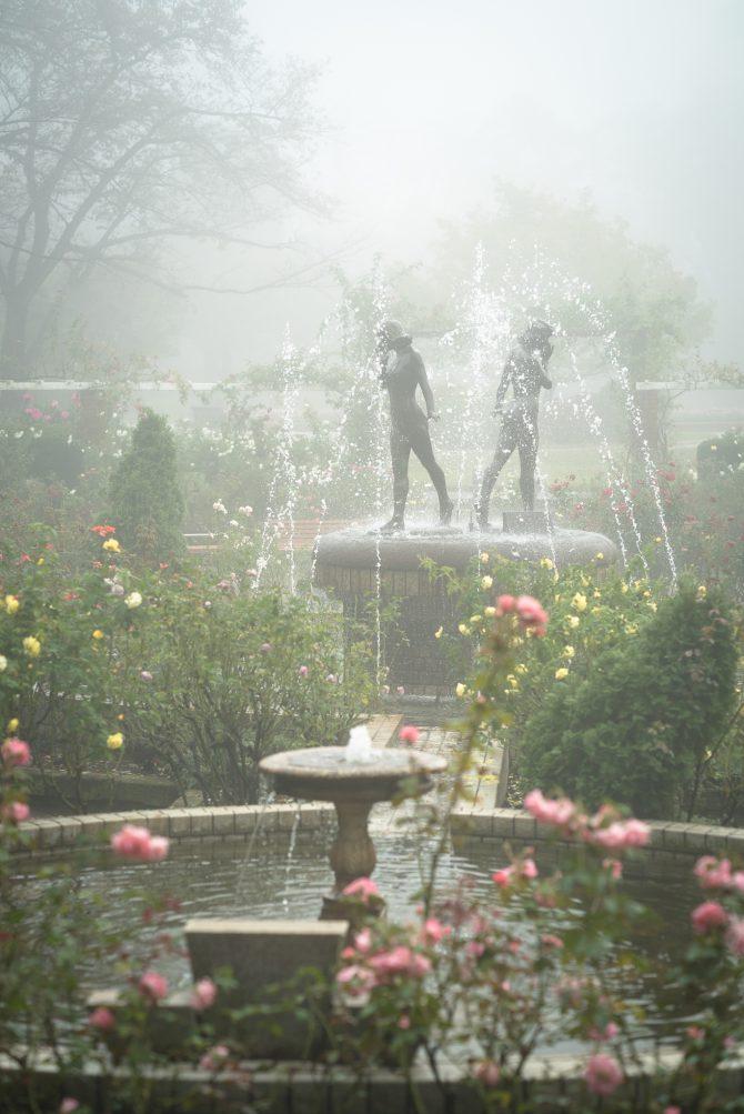 霧のバラ園