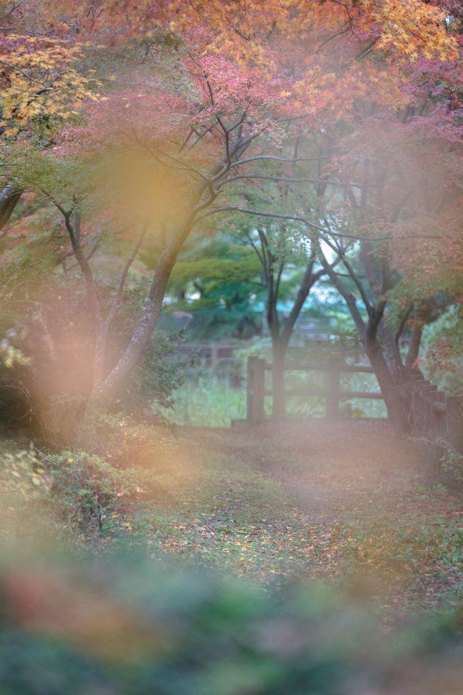 大町公園のせせらぎ園の紅葉