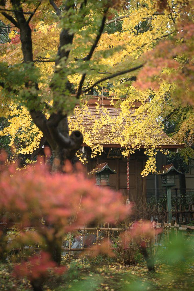 真間山弘法寺の紅葉