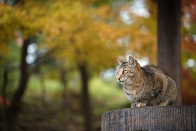 晩秋の色に囲まれて