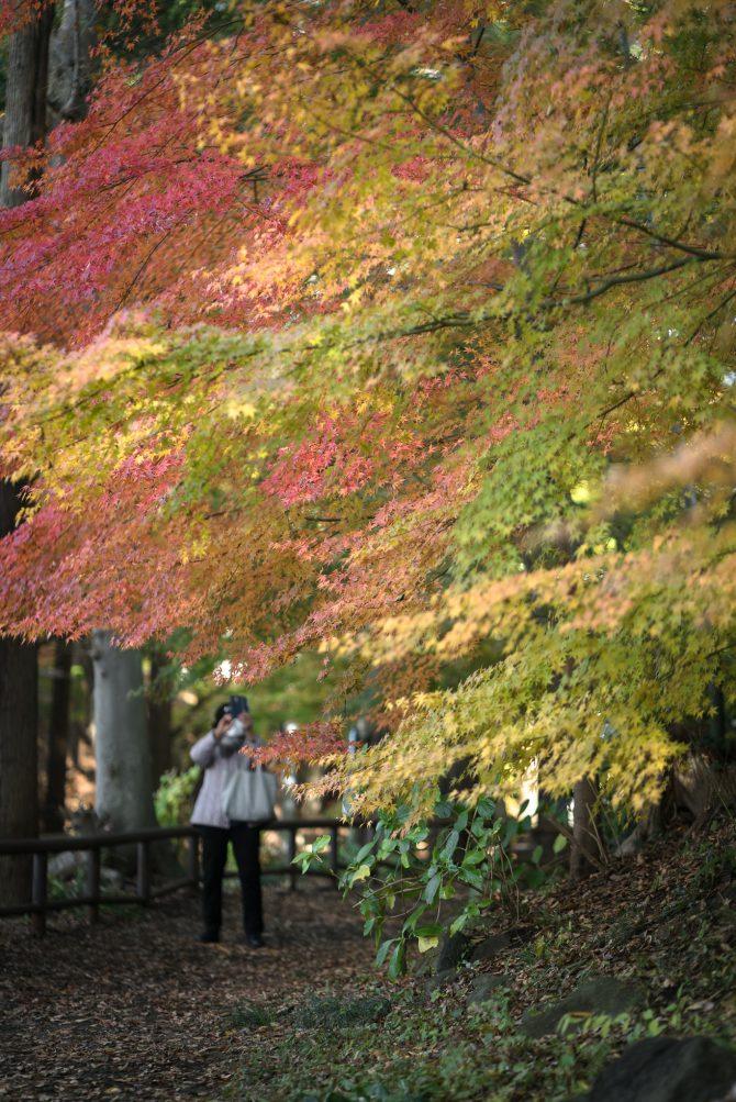 市川市動植物園駐車場隣の紅葉