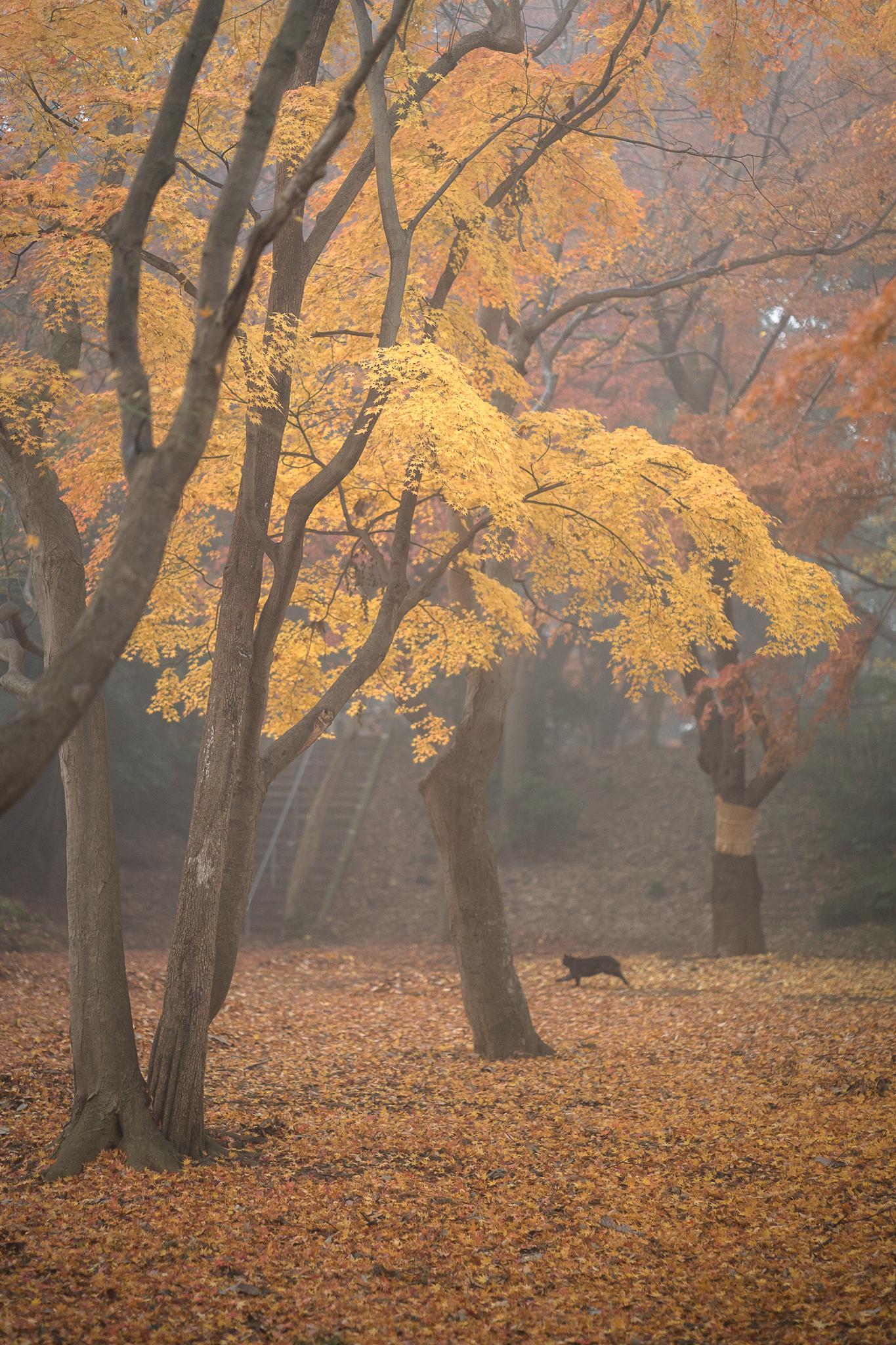 霧中の紅葉 2019年12月18日 里見公園より撮影