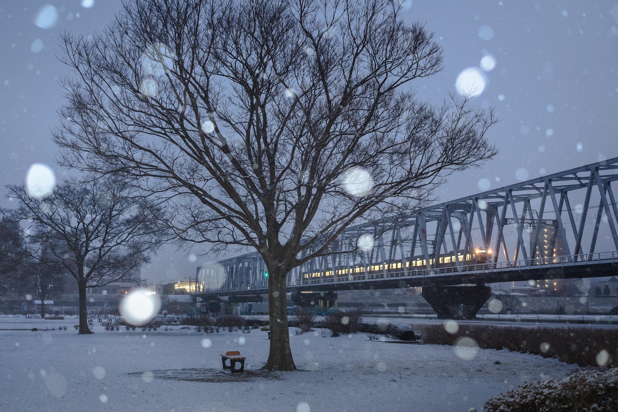 雪の江戸川河川敷と京成線 2019年2月11日 小岩菖蒲園にて撮影