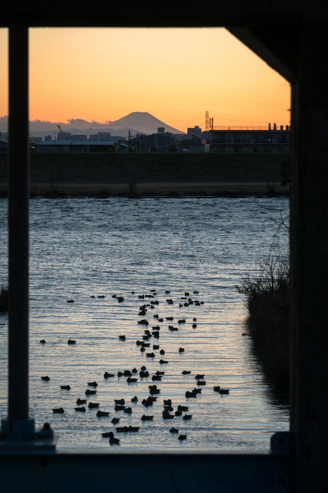 富士山と水鳥の夕暮れ