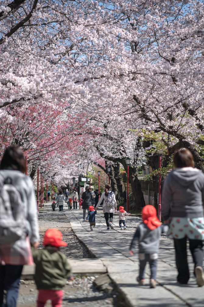 春の法華経寺参道にて