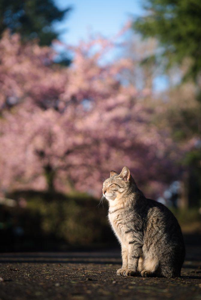 春の日向ぼっこ