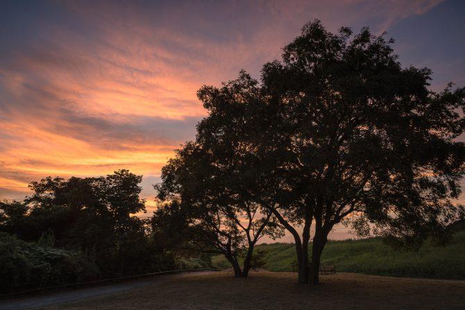 大樹と夕焼け空