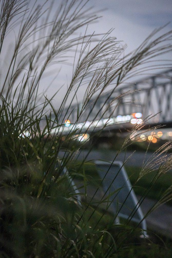 夜のススキと京成線
