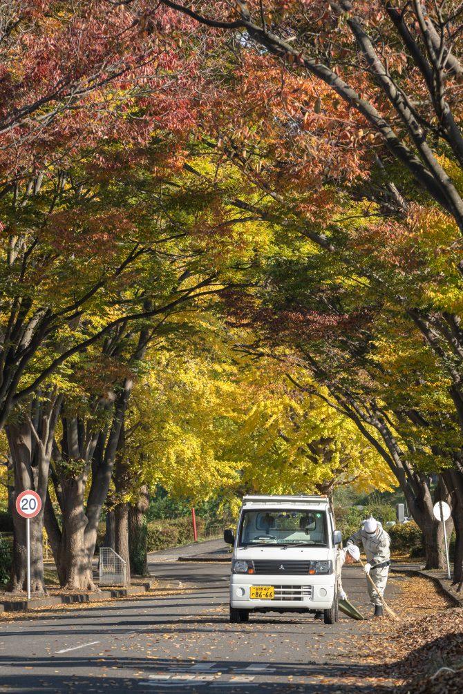 市川市霊園の黄葉
