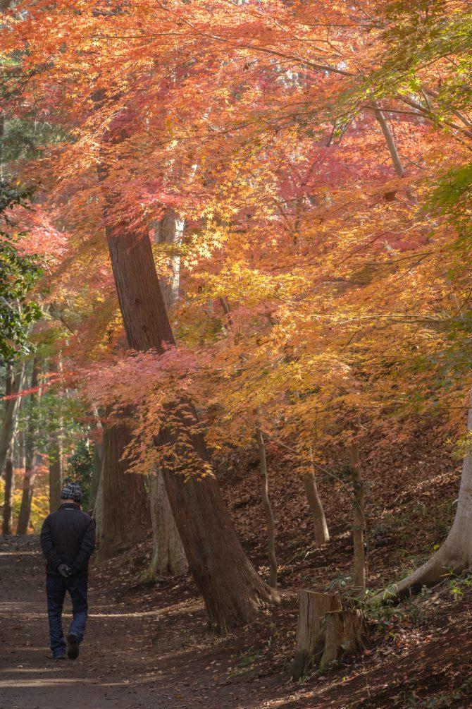 大町公園の紅葉