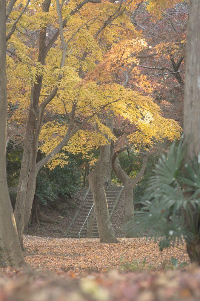 里見公園の紅葉