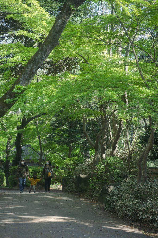 新緑の里見公園