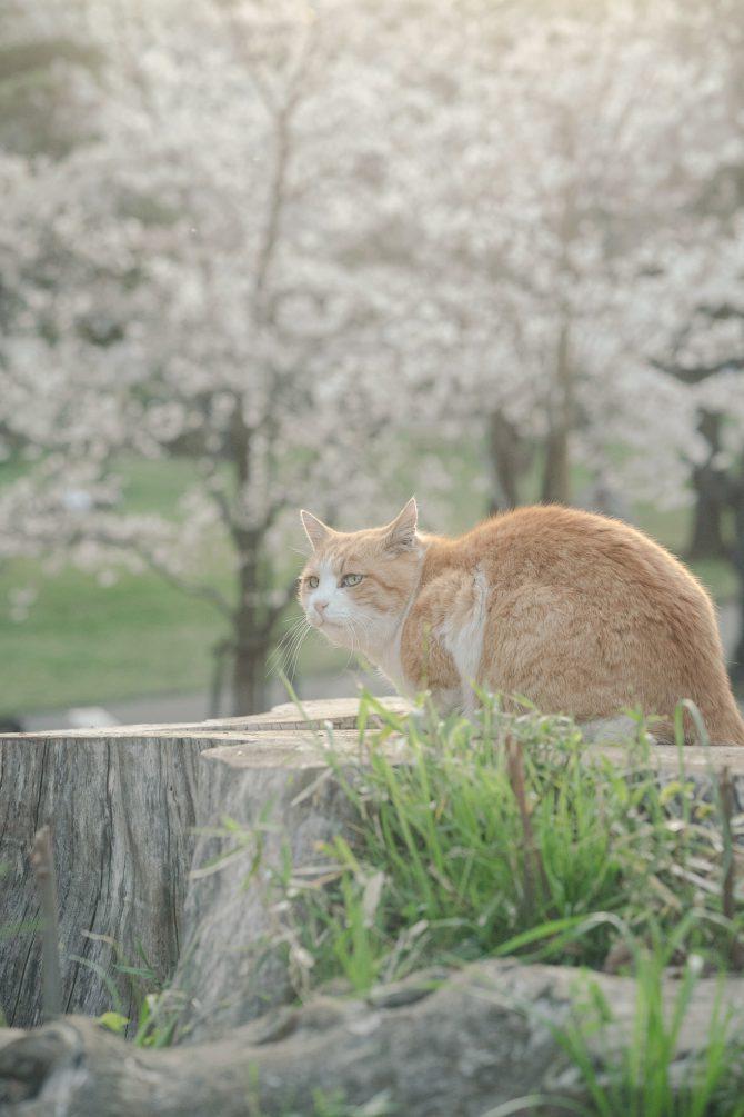 春の夕暮れに