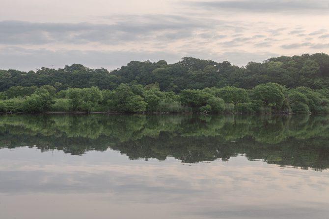 江戸川がおだやかな朝に