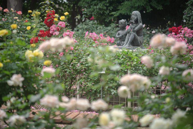 須和田公園のバラコーナー