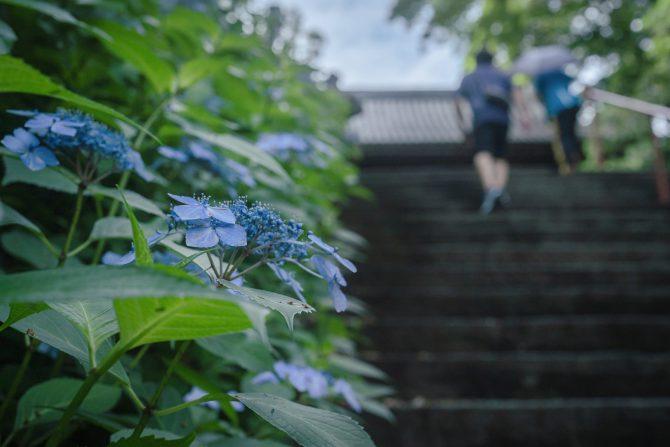 真間山弘法寺の石段の紫陽花